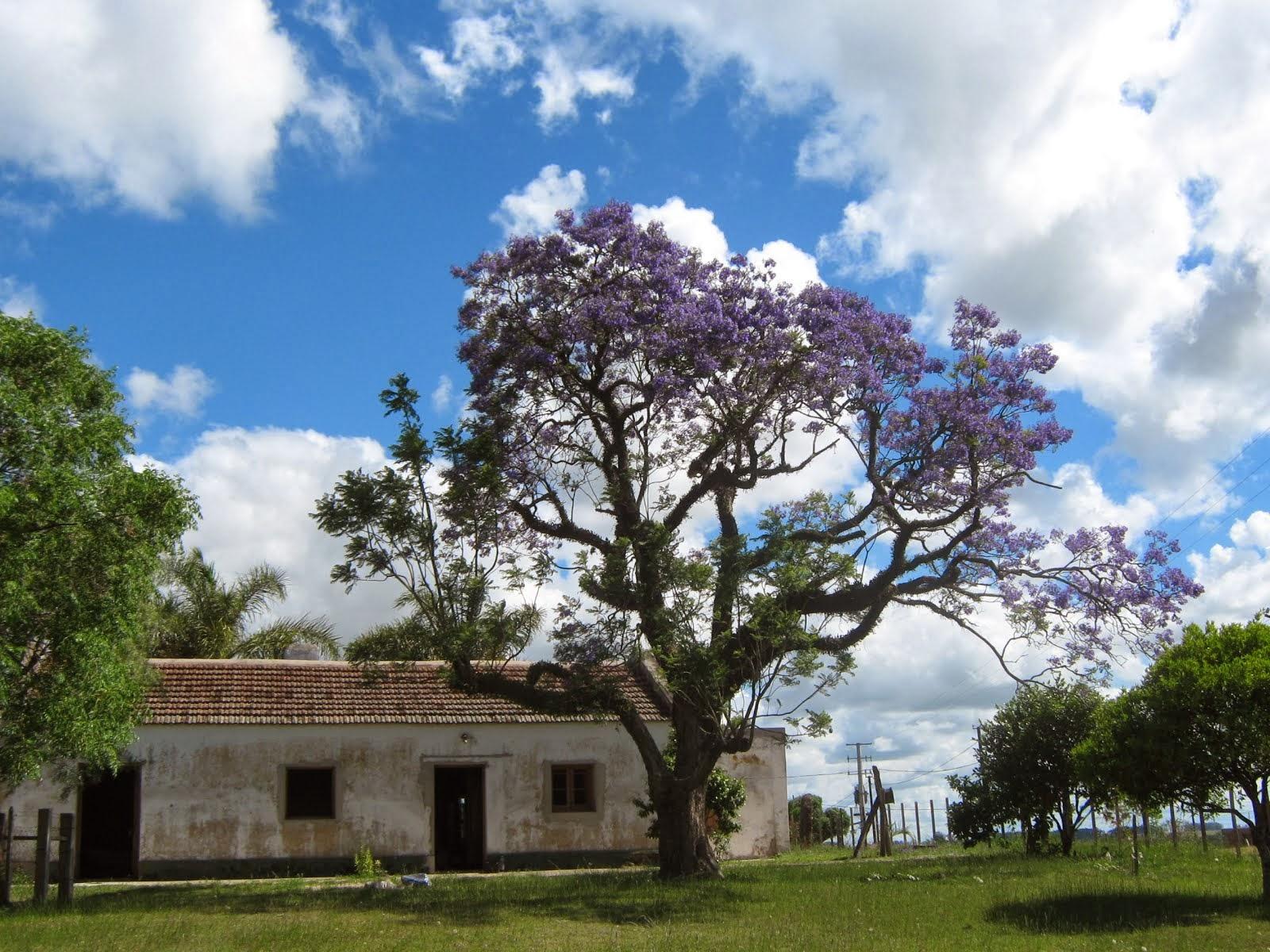 """Casa conocida como """"La Norma"""" -  La más antigua de Villa Ansina"""