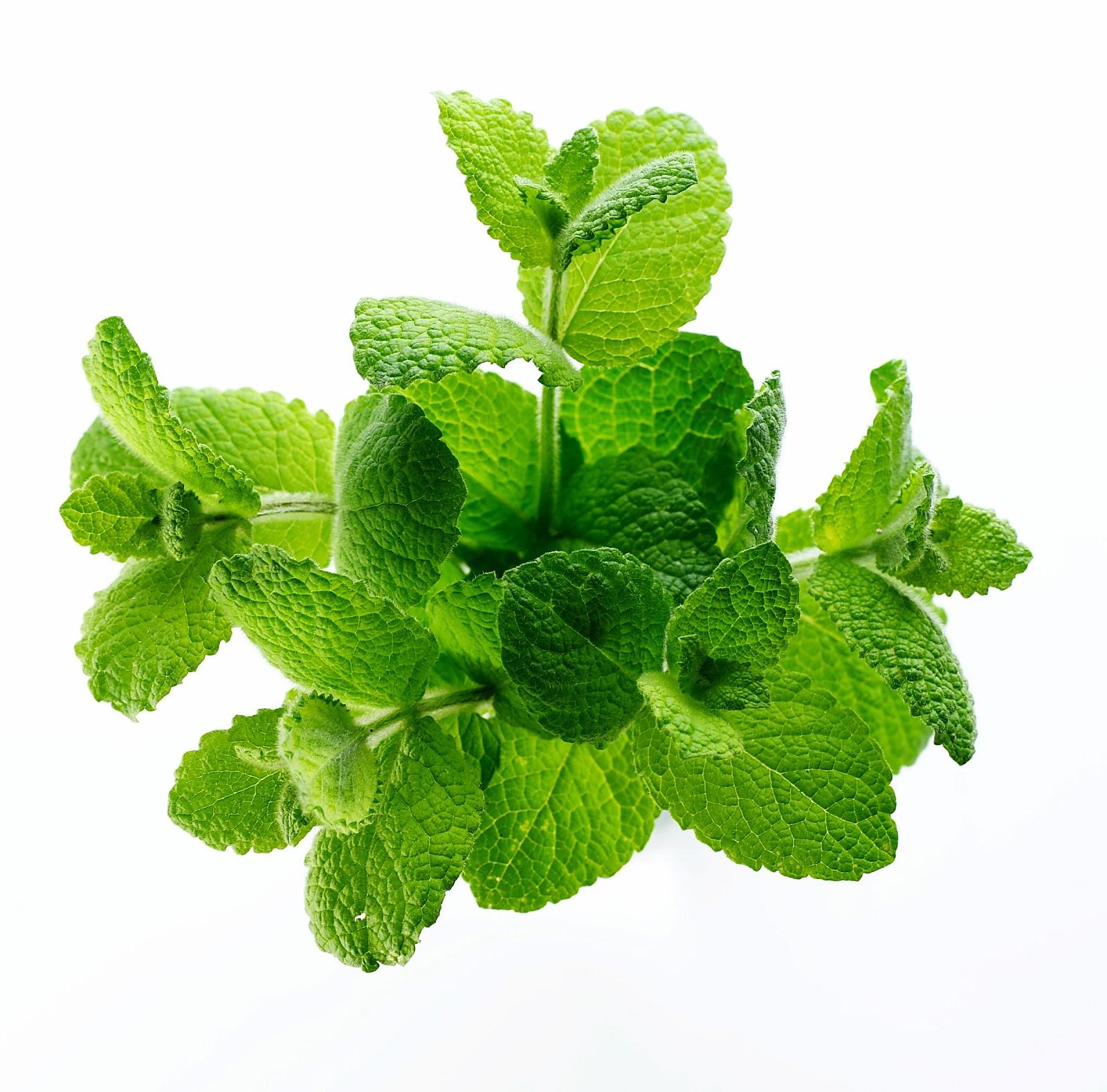 травяной чай для похудения фото
