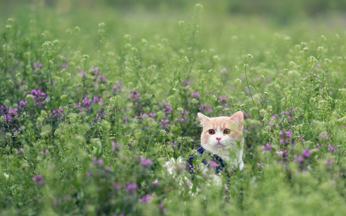 Cat in Flowers Widescreen HD Wallpaper