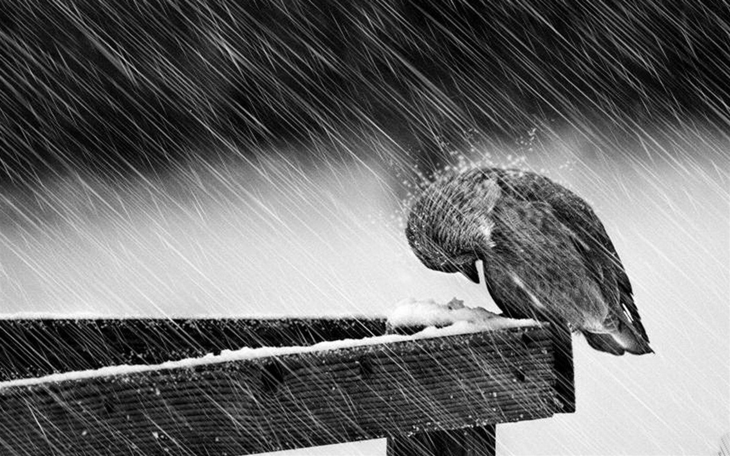 Animal Wallpaper Rain Hd Wallpapers Inspiration Image Source From This