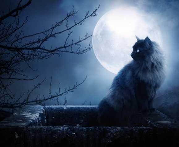 Adopt Black Cat October