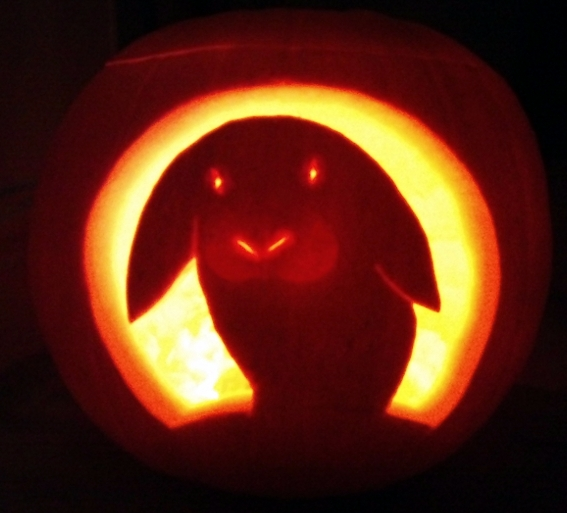 rabbit ramblings bunny pumpkins for halloween