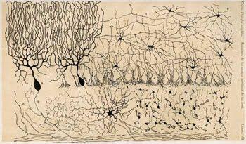 Ramón y Cajal y su Doctrina de la neurona