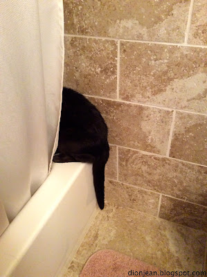 Black cat in tiled bathroom, looking into the tub