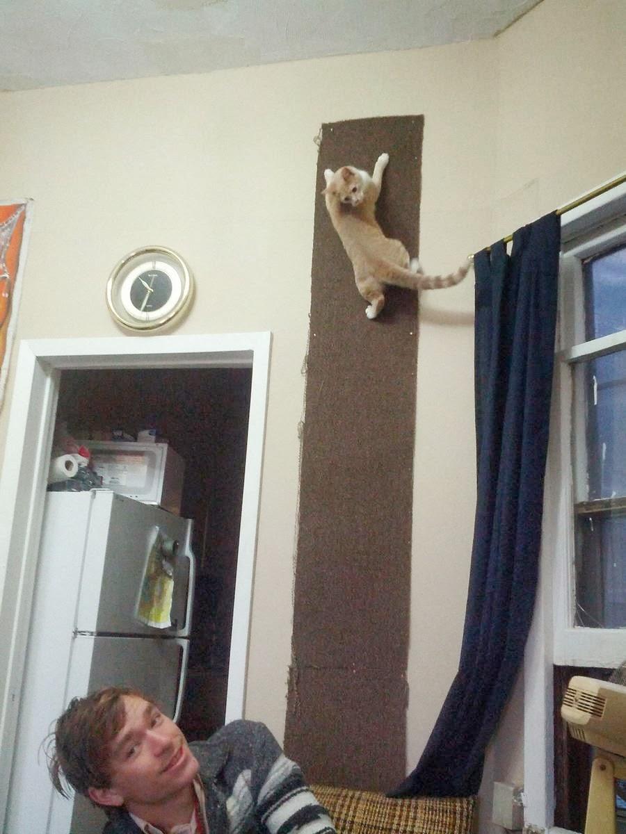 Funny cats - part 90 (40 pics + 10 gifs), cat climbing wall
