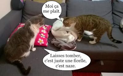 Deux chats et une ficelle.