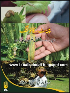 Pest Scouting and Spray guide line in Urdu