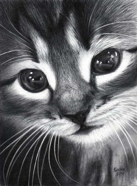 رسم قطة بالفحم