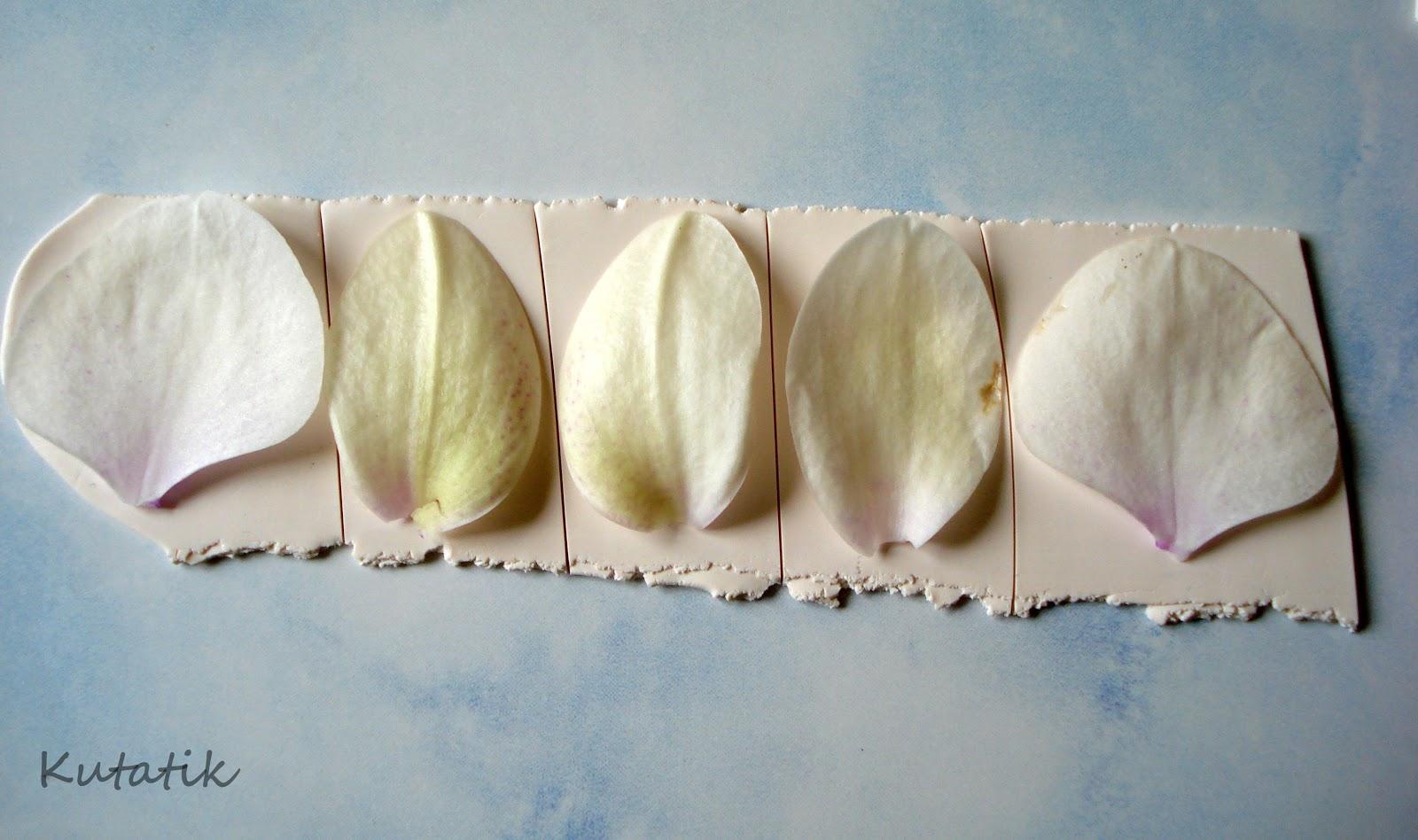 Tutoriel comment faire une orchid e en fimo le blog de miss kawaii - Un ou une petale ...