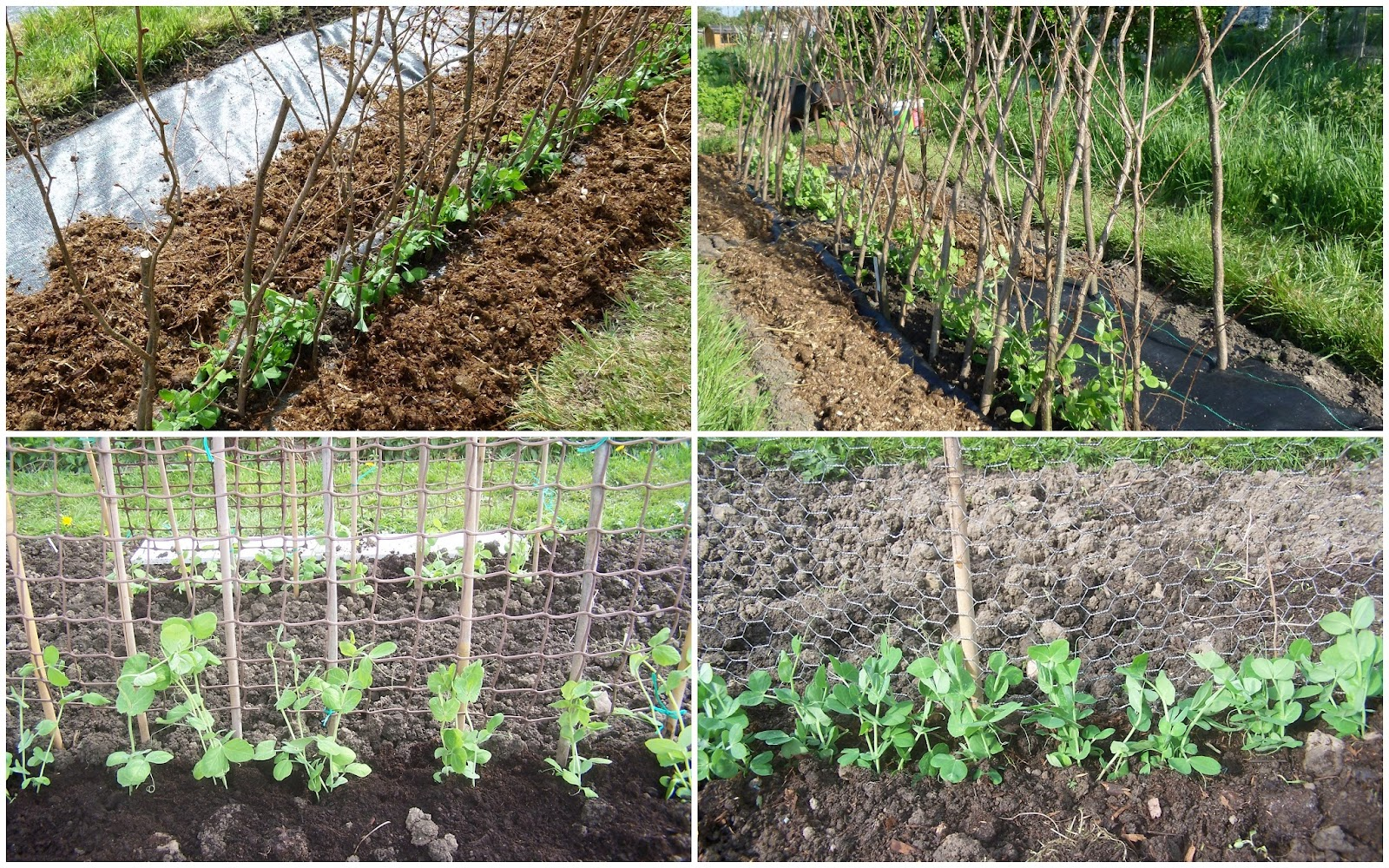 Our Plot at Green Lane Allotments: Getting the support right