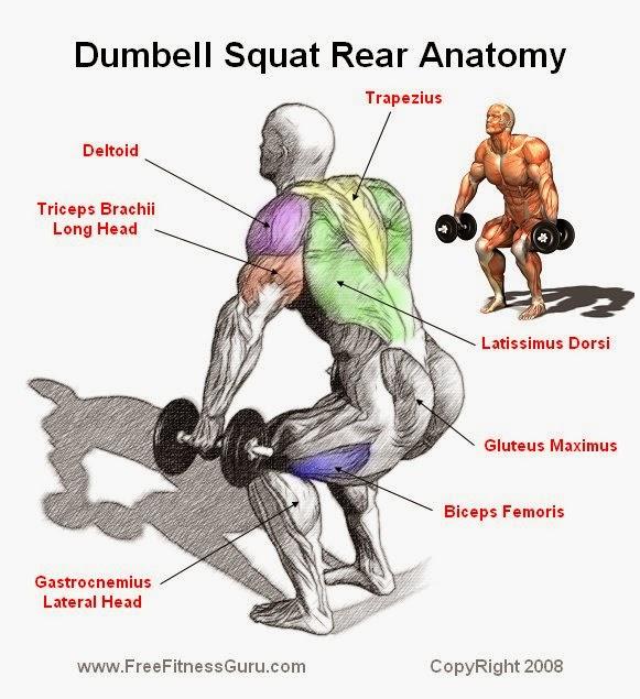 Dumbell Military Press Anatomy: Dumbell Squat Anatomy