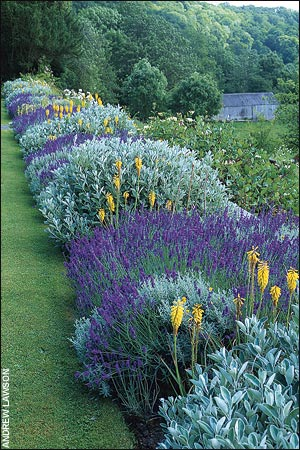 όμορφο παρτέρι στον κήπο με λεβάντες και λεβαντίνες