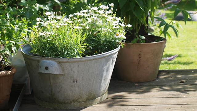 Tips til når haven skal være alene hjemme i sommeren