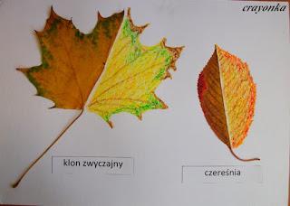 liście z dorysowaną kredkami świecowymi drugą połówką
