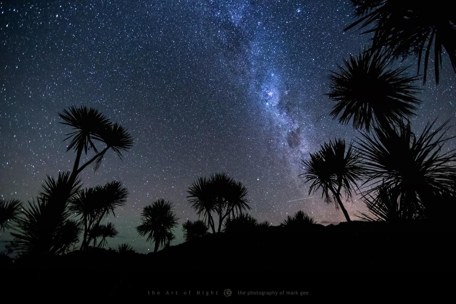 Bầu trời đêm mùa hè với những bóng cây ở Tân Tây Lan. Tác giả : Mark Gee.