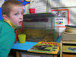 school project learning about tadpole metamorphosis