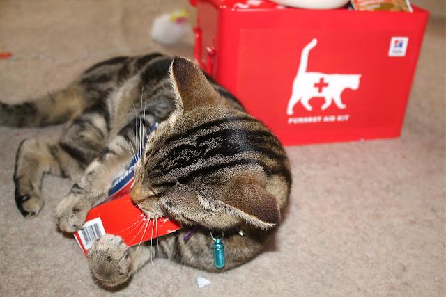 feline urinary health