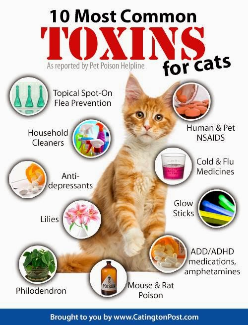Foods Poisonous To Cats