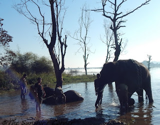 Sakrebail Elephant Camp