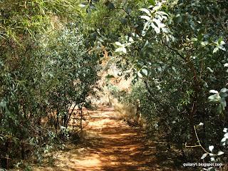 Kuniya walk - Mutitjulu waterhole