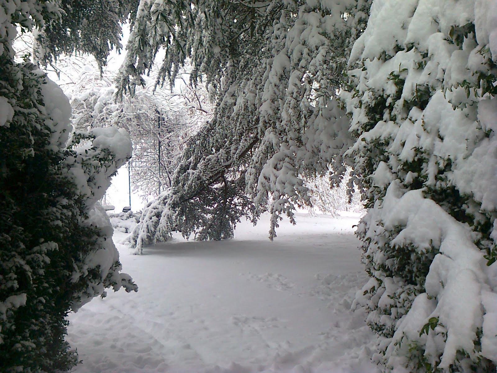 attrice giardiniera: giardino dinverno