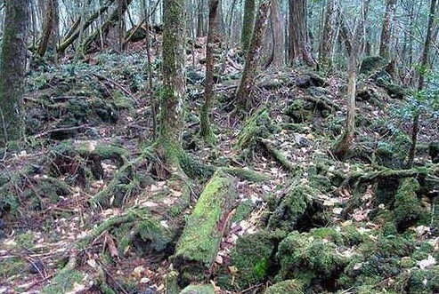 Aokigahara, Hutan Paling Menakutkan di Jepun