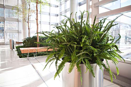 Interior Design Ideas Beautiful interior office plants from Phillips