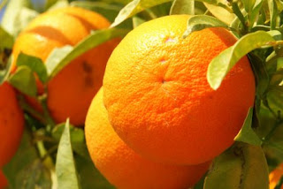 Health benfit of citrus
