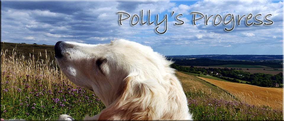 Polly's Progress
