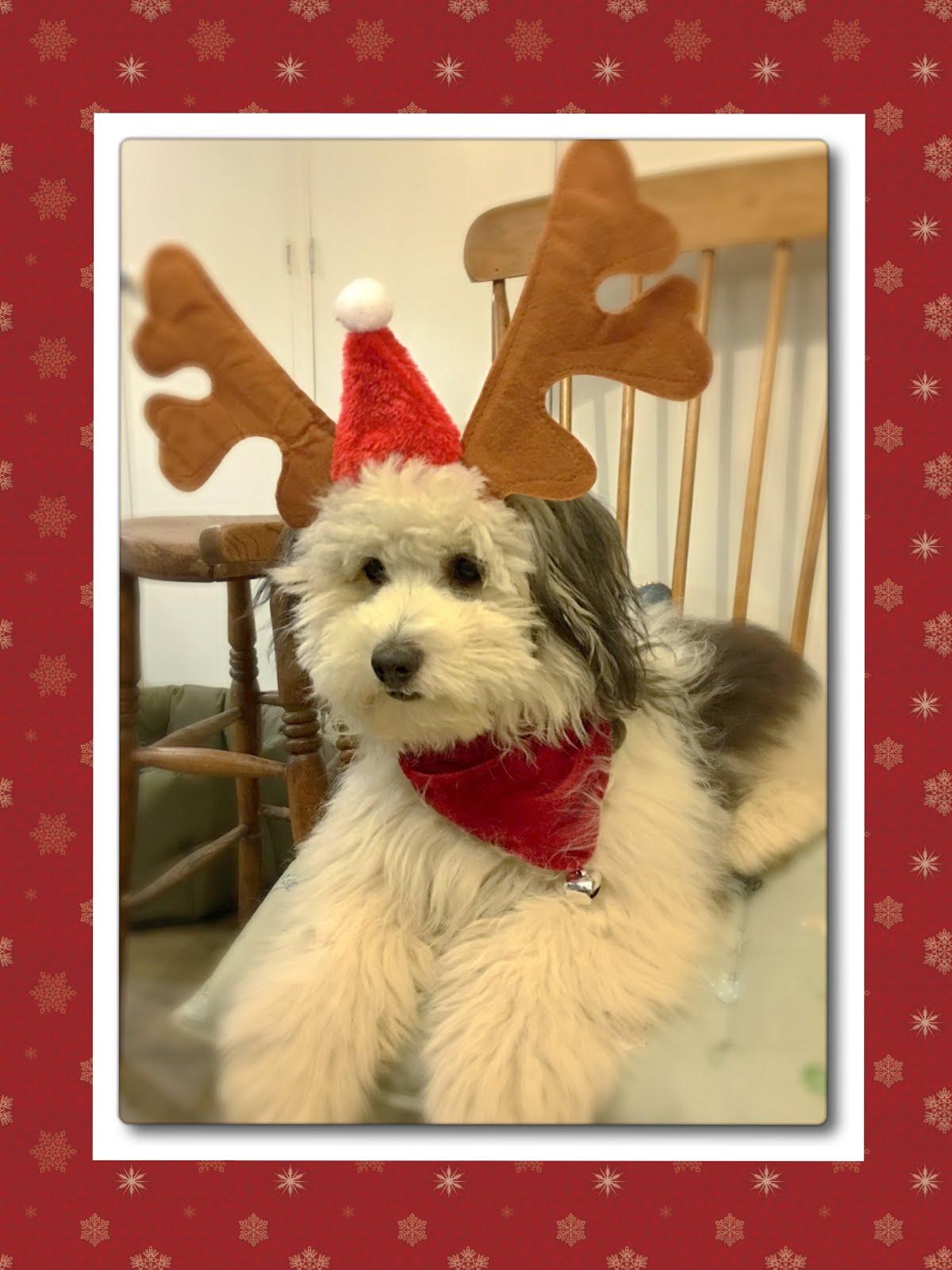 Reindeer Jack
