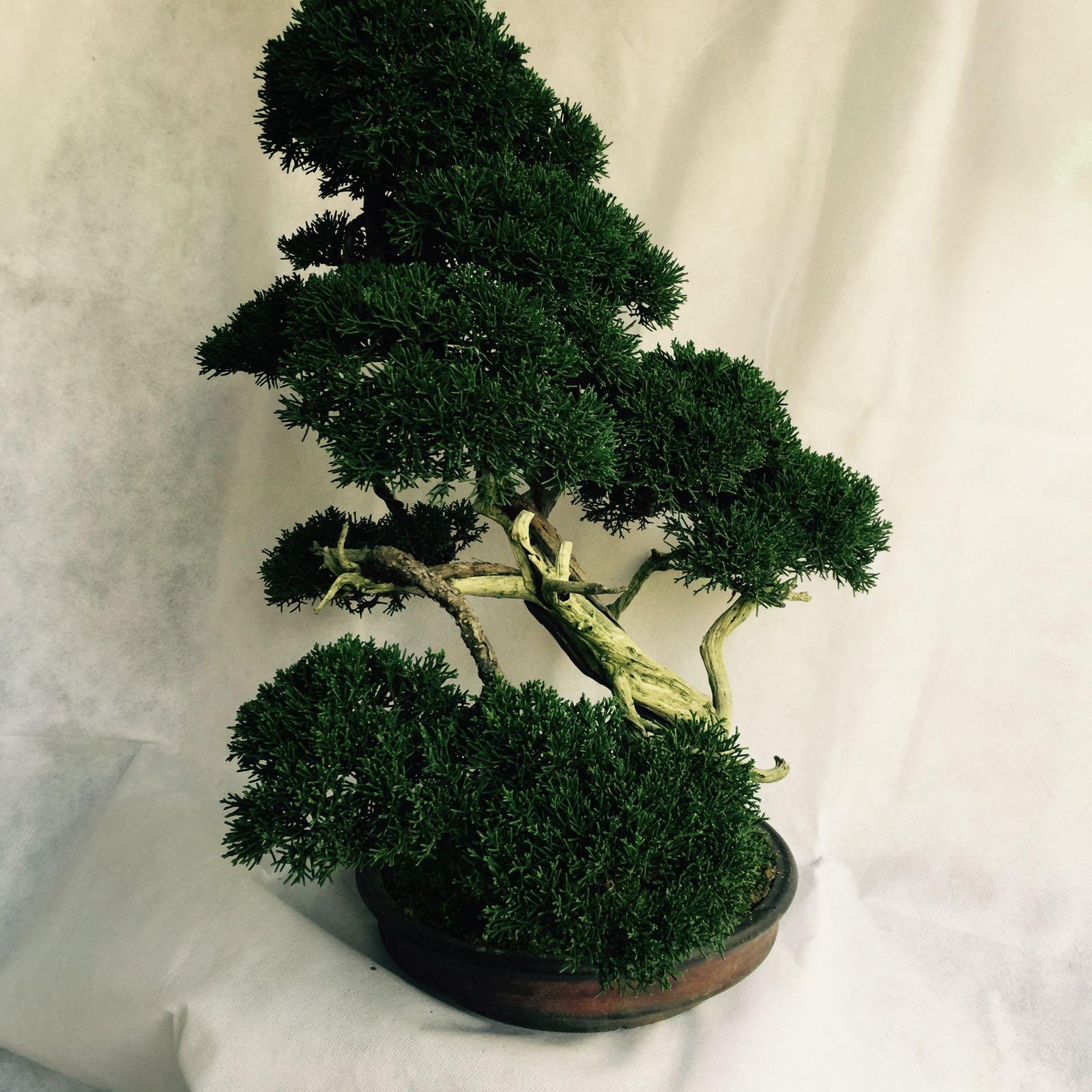 The Arts Of Beautiful Bonsai Lies In Boh39s Bonsai