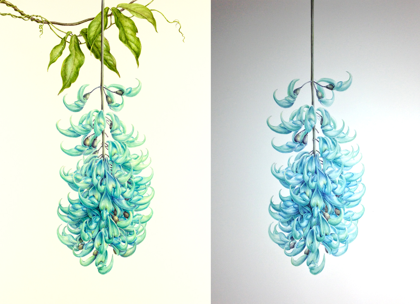Jade vine painting photograph comparison
