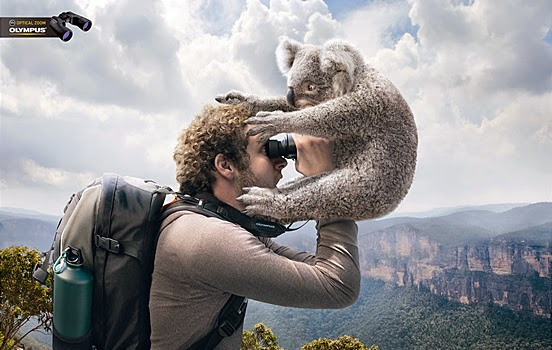 young guy takes picture with koala