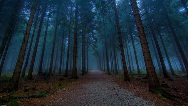 Foggy Forest Amazing HD Desktop Wallpaper