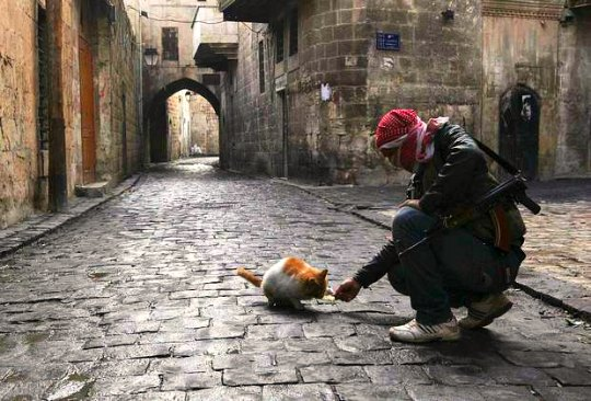 aleppo war cats