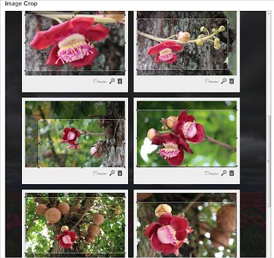 Redefinição das imagens no Croppola