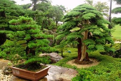 Arte y jardiner a rocas y paisajes en la cultura japonesa for Arboles japoneses para jardin