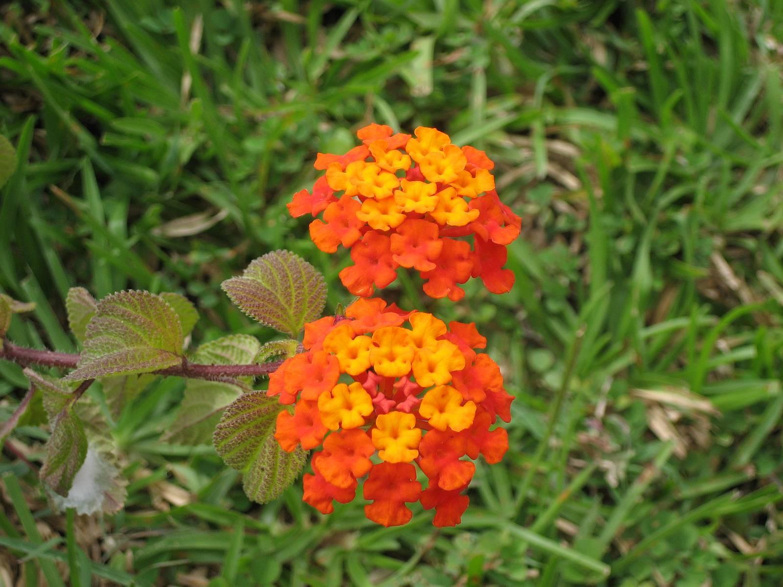 http://2.bp.blogspot.com/-D3dqWPQ2ZJ4/TfZSvzu9D2I/AAAAAAAAAJg/AWGP2csOE5E/s1600/Orange+Flowers+Wallpaper6.jpg