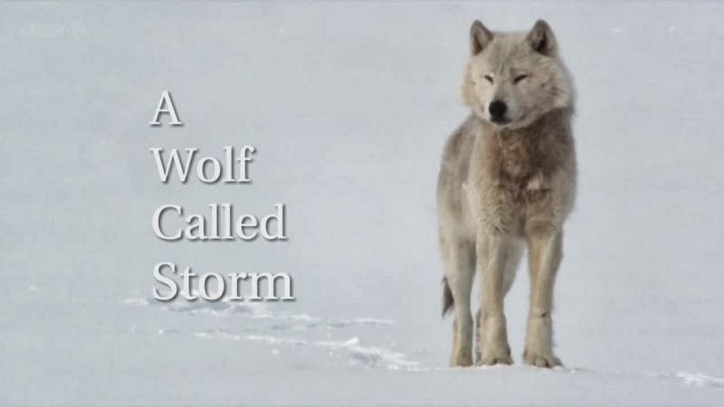 [Slika: A-Wolf-Called-Storm-Cover.jpg]
