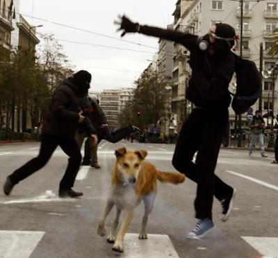 Anjing Paling Berani di Dunia
