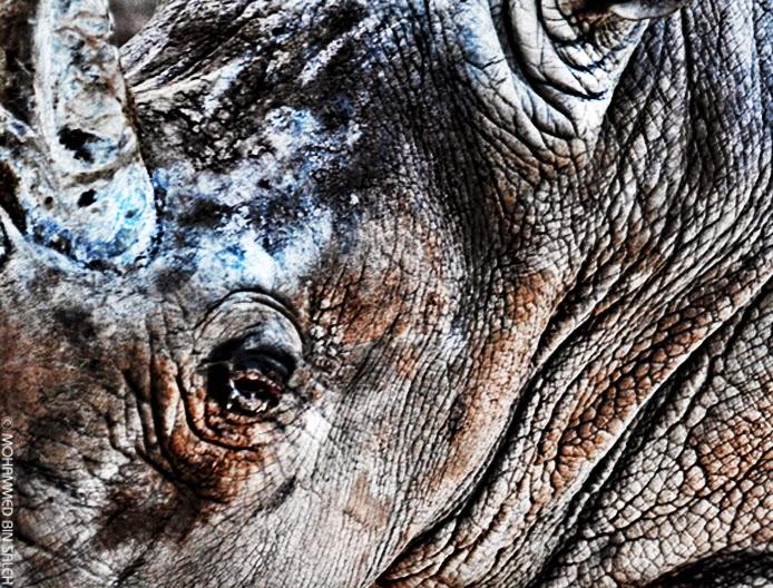 وحيد القرن الكركدن الخرتيت حيوان ضخم