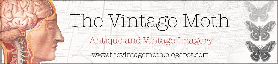 The Vintage Moth..