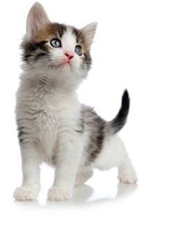Educate the kitten : how say no to him ?,Educate the kitten,kitten in, cat care, kitten tips, cat tips, kittens, cats, cat advice kitten advice