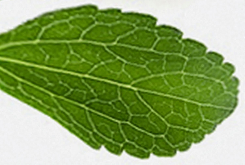 Tumbuhan Stevia di India