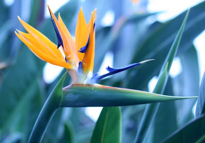 Nature walk in Royal Botanical Garden - The Bird of Paradise :: All Pretty Things