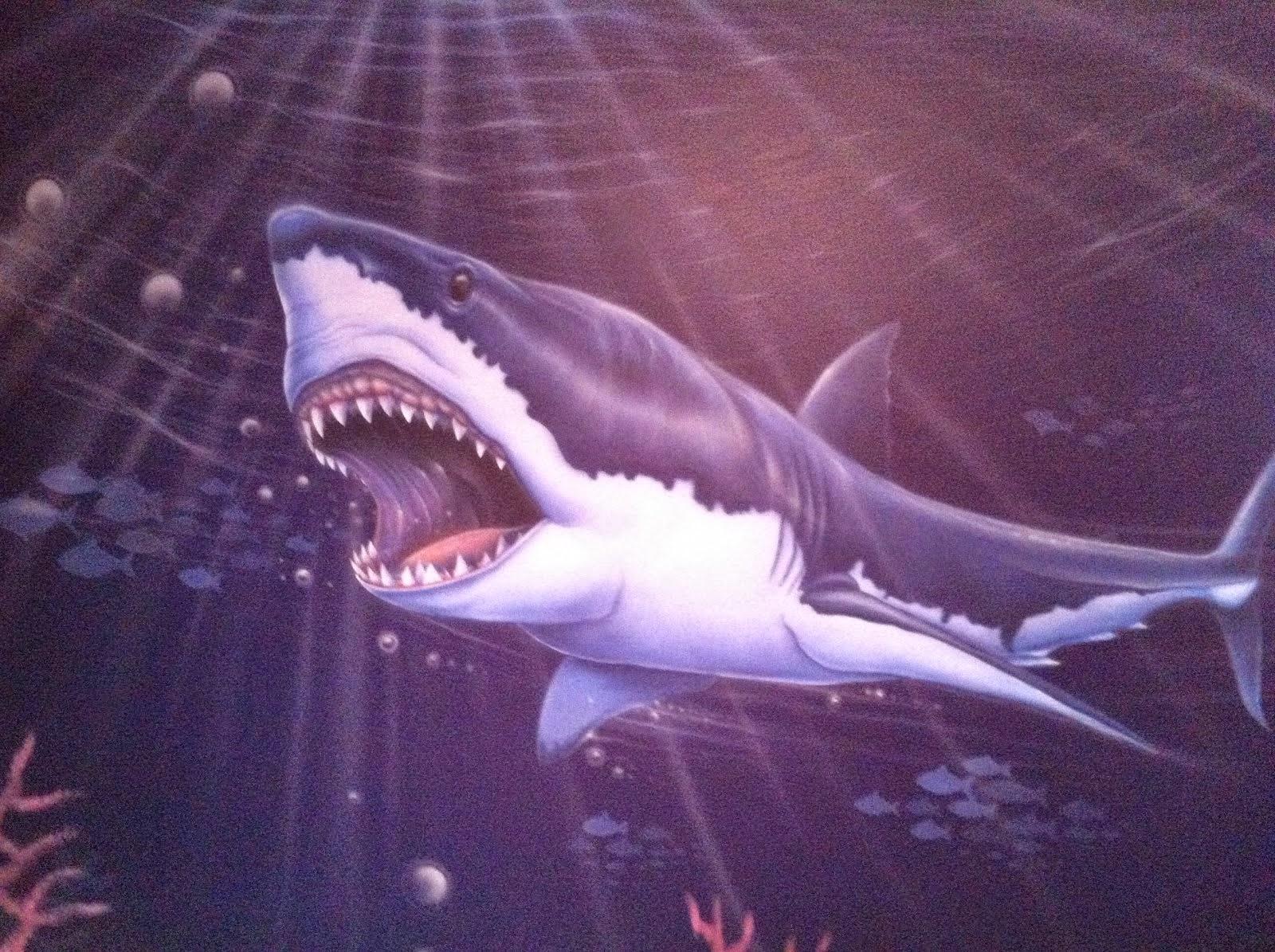 amateur de requin blanc