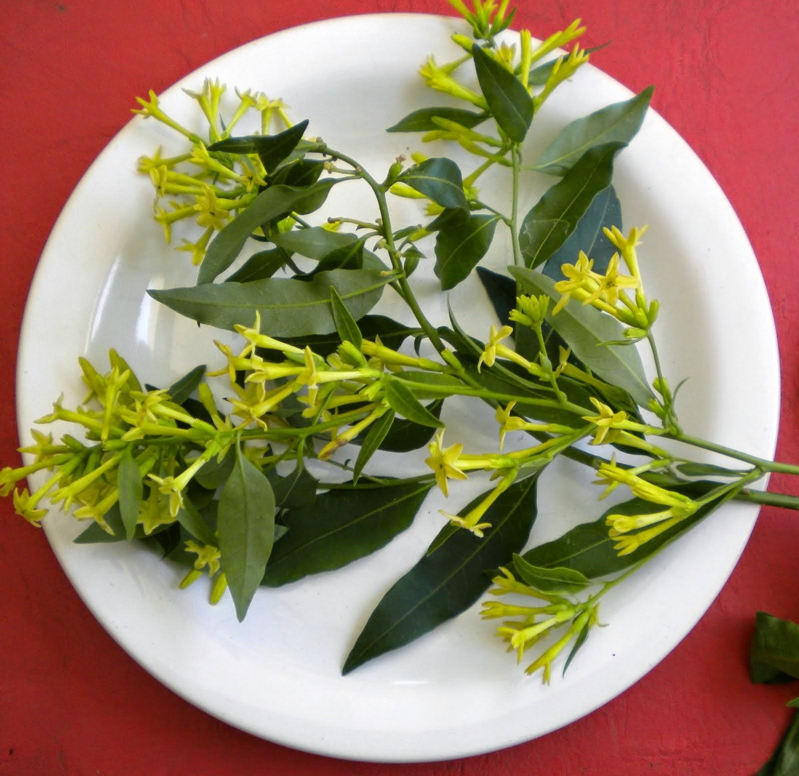 V e r d e c h a c o creencias populares las plantas y la buena suerte salud dinero y amor 3 - Plantas para la buena suerte ...