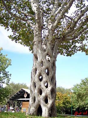 صور أشجار غريبة