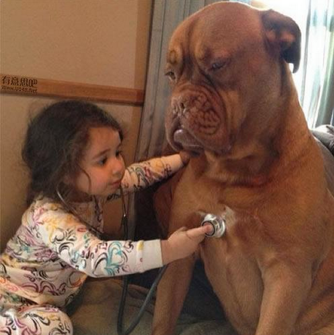 dog baby stethoscope