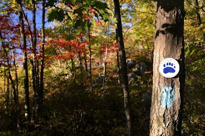 the trail at Mt. Negus